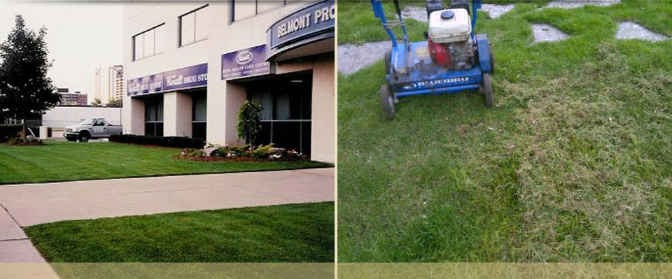 commercial landscaping and dethatching